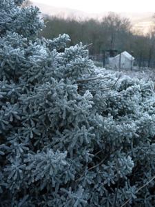 トスカーナの冬_f0106597_4271830.jpg