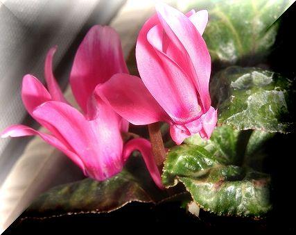 穏やかに水仙が咲く_d0147812_15283954.jpg