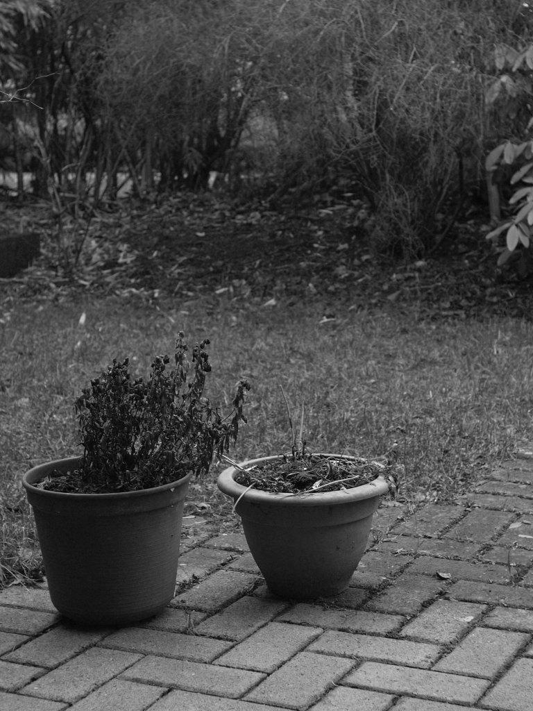 Leica Elmarit-R 35mm_b0148617_5313091.jpg