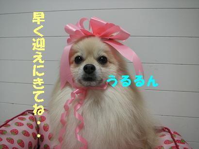 c0179136_3524471.jpg