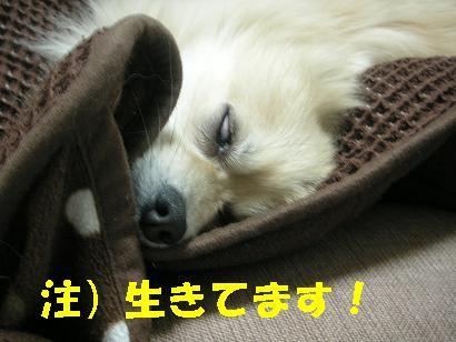 c0179136_3525388.jpg
