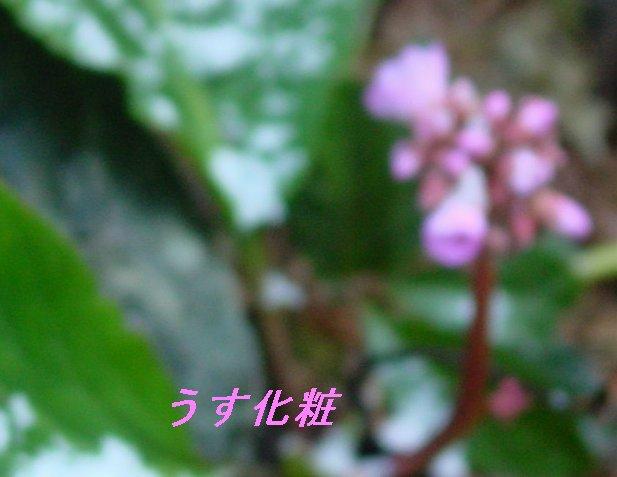 f0179357_829088.jpg