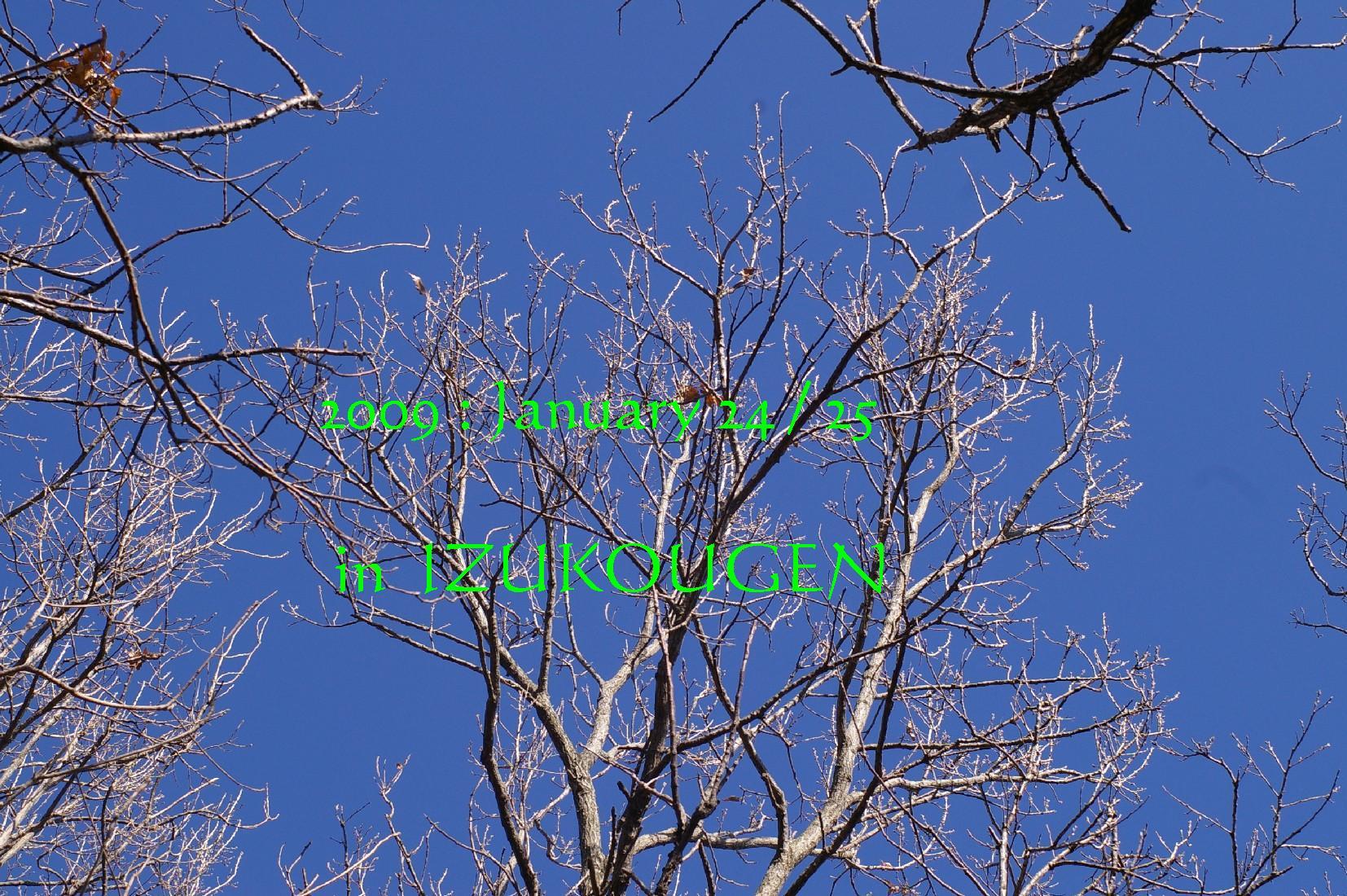 f0152674_21174840.jpg