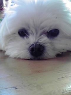ミミちゃん、飼い主さん、おしあわせに♪_c0167175_21295846.jpg