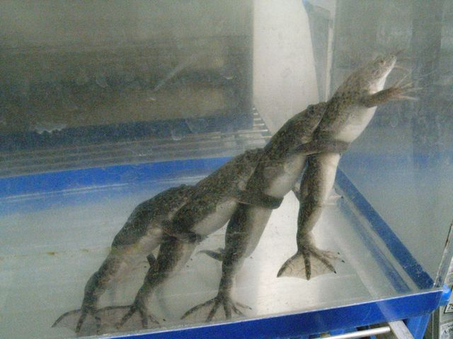カエルの電車ごっこ_c0025115_2111143.jpg