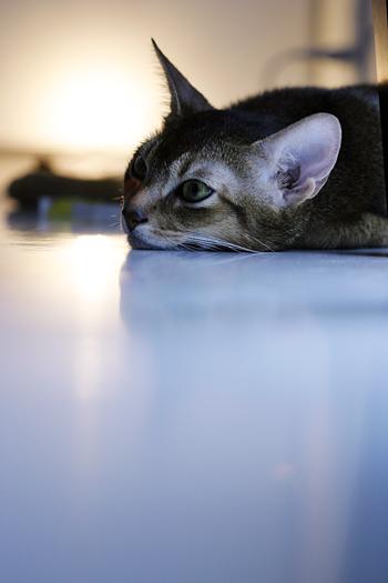 [猫的]5年_e0090124_81214.jpg