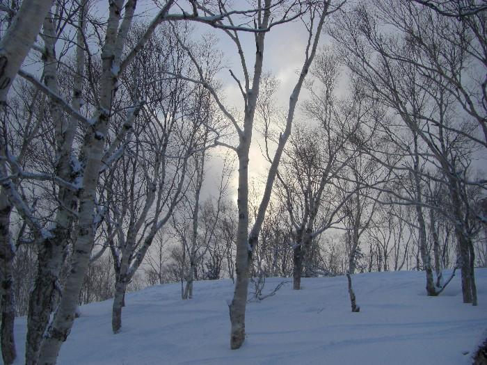 1月24日 手稲ハイランドスキー場_c0151965_2229385.jpg