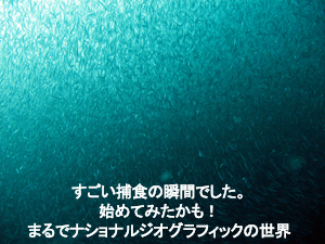f0144385_2574699.jpg