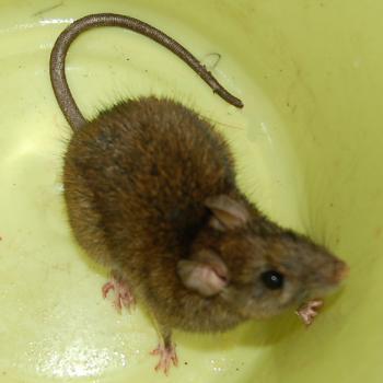夜の浅草でネズミと死刑を考える_e0149596_3471047.jpg