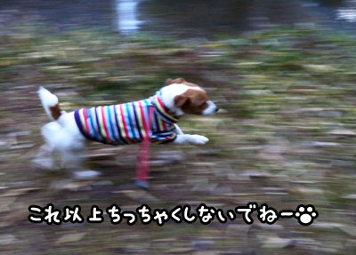 f0129214_16322227.jpg