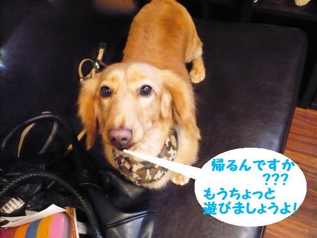 もっと遊びましょぉ♪&犬濯屋レシピ!_b0130018_144545.jpg