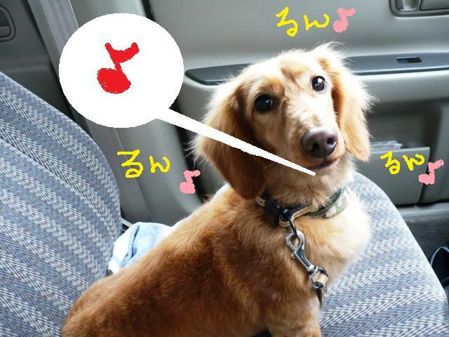 もっと遊びましょぉ♪&犬濯屋レシピ!_b0130018_1446696.jpg