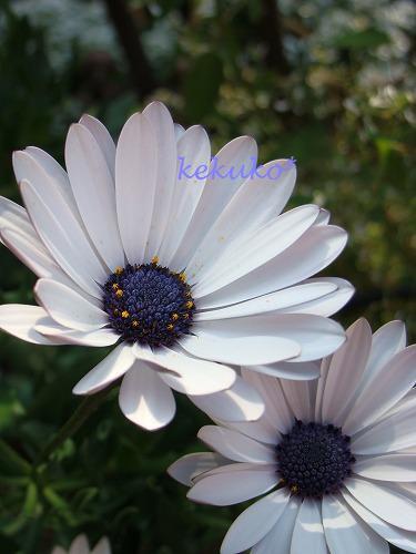 f0170524_16241641.jpg