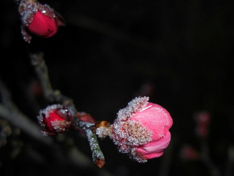 霜の朝_f0106759_6544044.jpg
