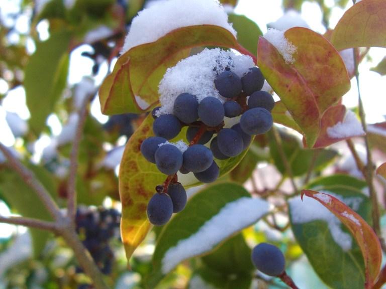 霜の朝_f0106759_6562111.jpg