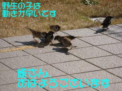 b0158061_2055951.jpg