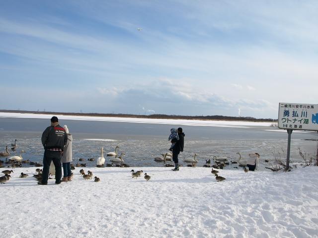 ♪ウトナイの湖畔~ 冬_d0153062_955353.jpg