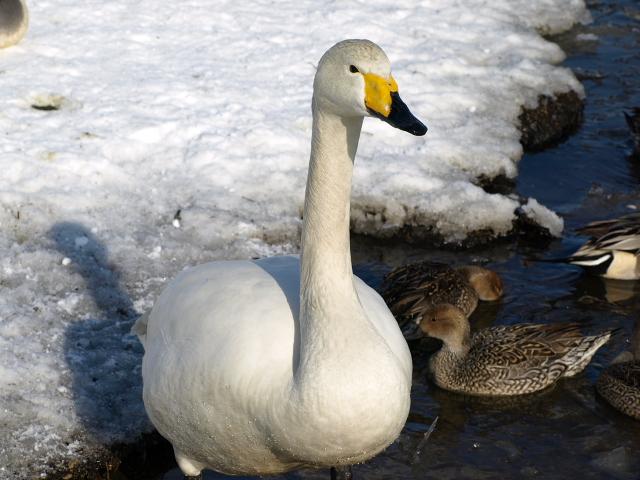 ♪ウトナイの湖畔~ 冬_d0153062_964494.jpg