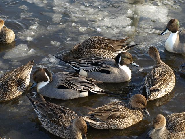 ♪ウトナイの湖畔~ 冬_d0153062_972644.jpg