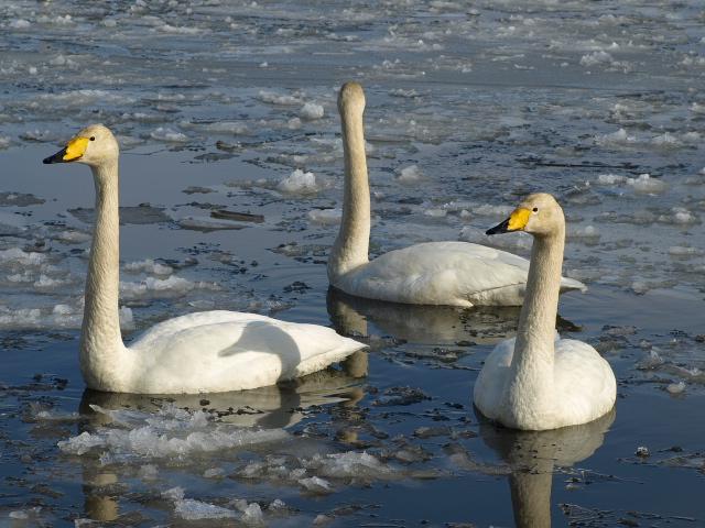 ♪ウトナイの湖畔~ 冬_d0153062_97684.jpg