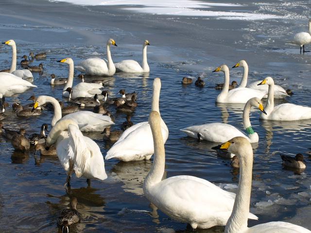 ♪ウトナイの湖畔~ 冬_d0153062_98780.jpg