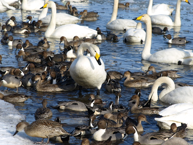 ♪ウトナイの湖畔~ 冬_d0153062_992065.jpg