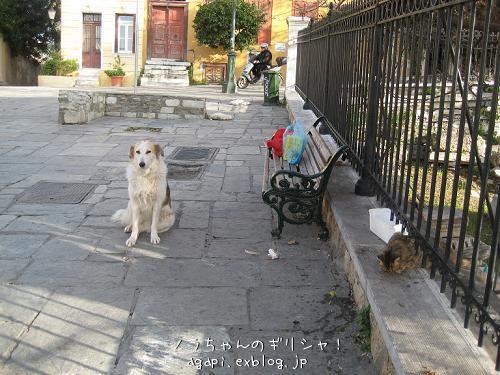 野良犬コスタの退屈な午後_f0037264_8375181.jpg