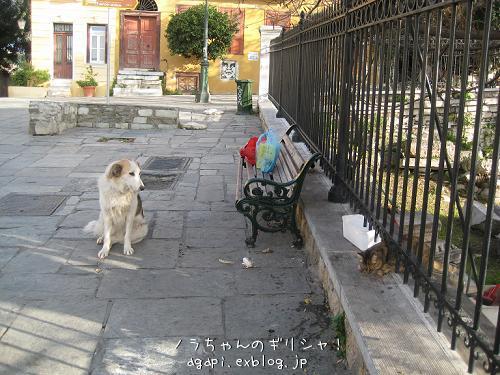 野良犬コスタの退屈な午後_f0037264_8382552.jpg