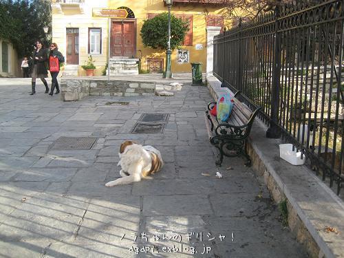 野良犬コスタの退屈な午後_f0037264_8385567.jpg