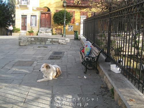 野良犬コスタの退屈な午後_f0037264_8392285.jpg