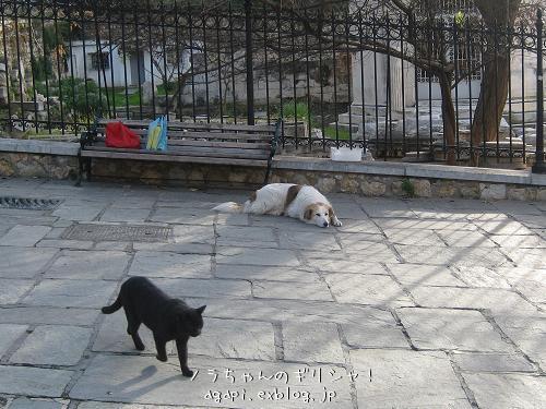 野良犬コスタの退屈な午後_f0037264_8394794.jpg