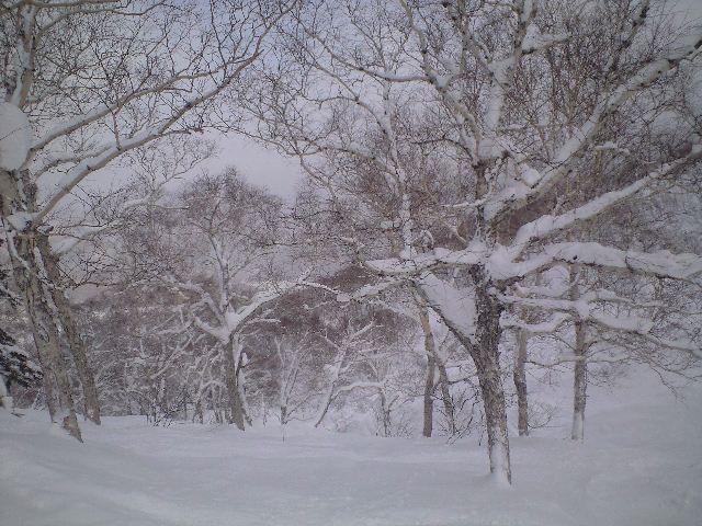1月26日  札幌国際スキー場 ☆ 天気良い_c0151965_21352617.jpg