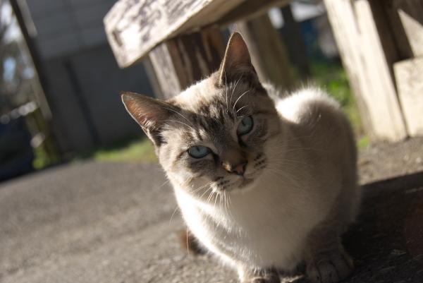 猫の撮影に挑戦しようと思います_c0168669_19261297.jpg