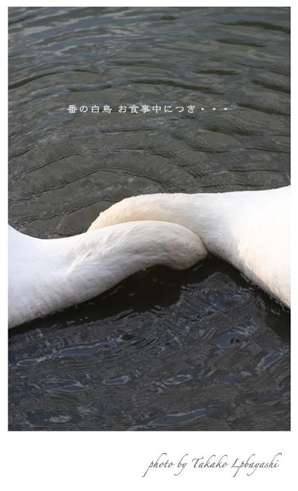 f0139890_21204076.jpg