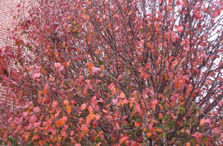 紅葉の季節・・・?_d0000995_11405968.jpg