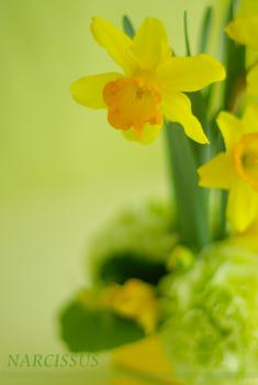 春のお花☆_b0111306_18455289.jpg