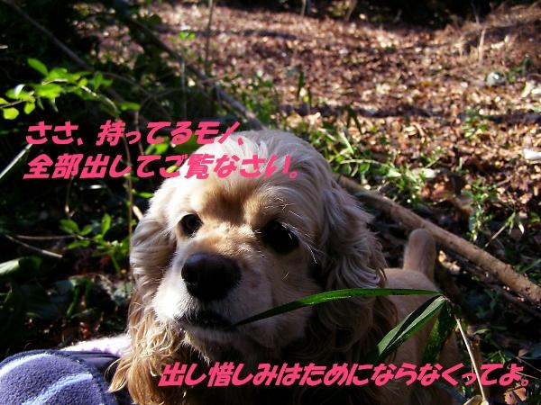 b0067012_156019.jpg