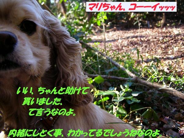 b0067012_1561758.jpg