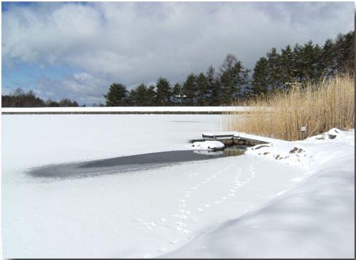 槻の池と 鳥の足跡_d0109415_1251433.jpg