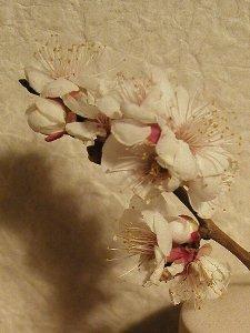 春の香り。_b0157216_2356085.jpg