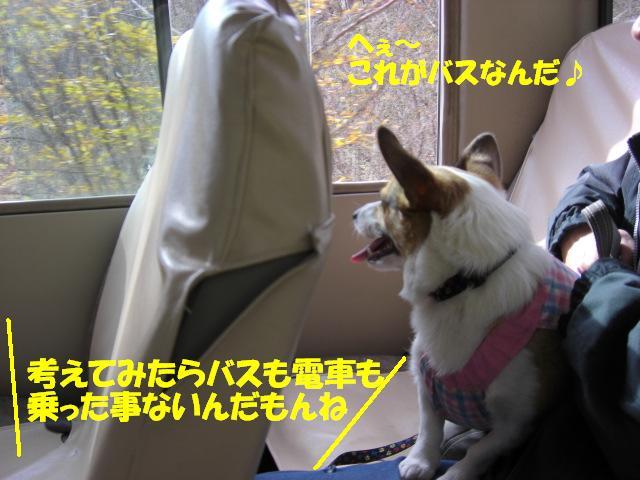 f0182121_748449.jpg