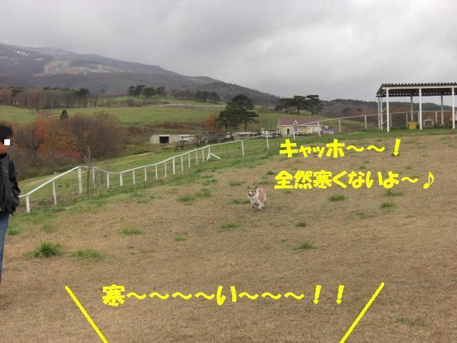 f0182121_7593449.jpg