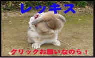 c0151439_1121164.jpg