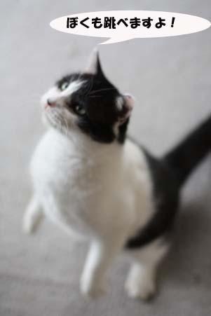 今日のラス君と新たな保護猫候補_e0151545_2149285.jpg