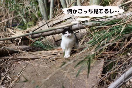 今日のラス君と新たな保護猫候補_e0151545_21494227.jpg
