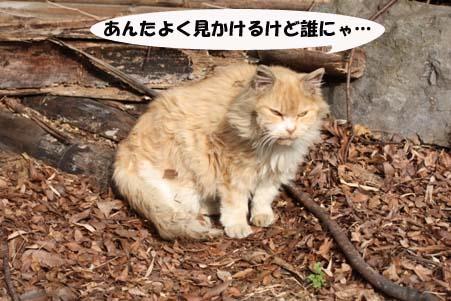 今日のラス君と新たな保護猫候補_e0151545_21495789.jpg