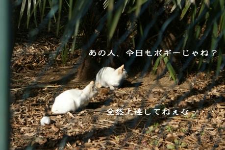f0190851_0505697.jpg