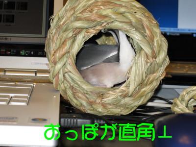 b0158061_2111330.jpg
