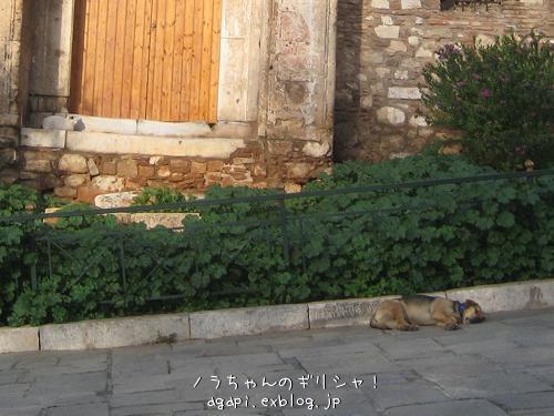 猫と昼寝をしようと思っていた野良犬君_f0037264_9105473.jpg