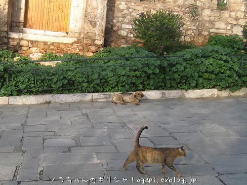 猫と昼寝をしようと思っていた野良犬君_f0037264_913271.jpg